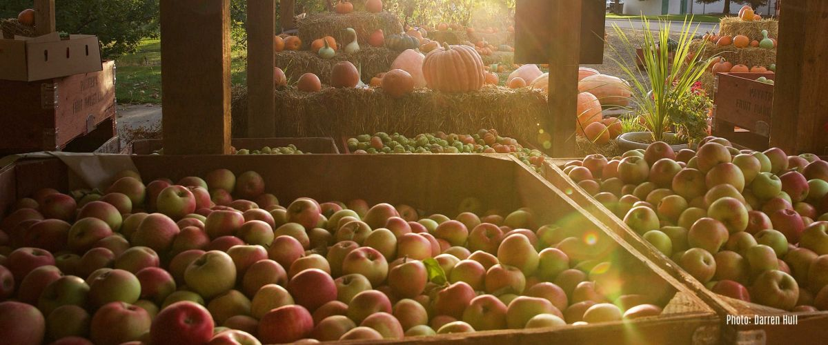 Thanksgiving harvest in West Kelowna
