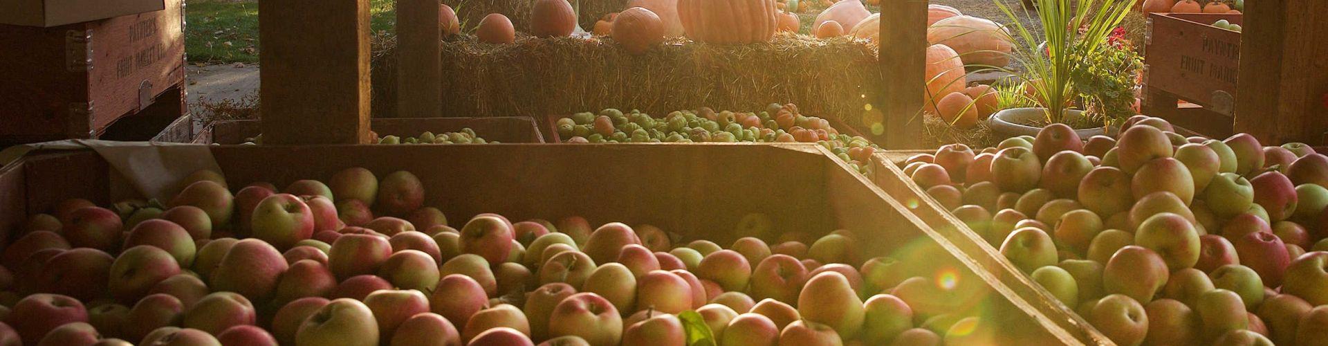 Thanksgiving harvest in West Kelowna