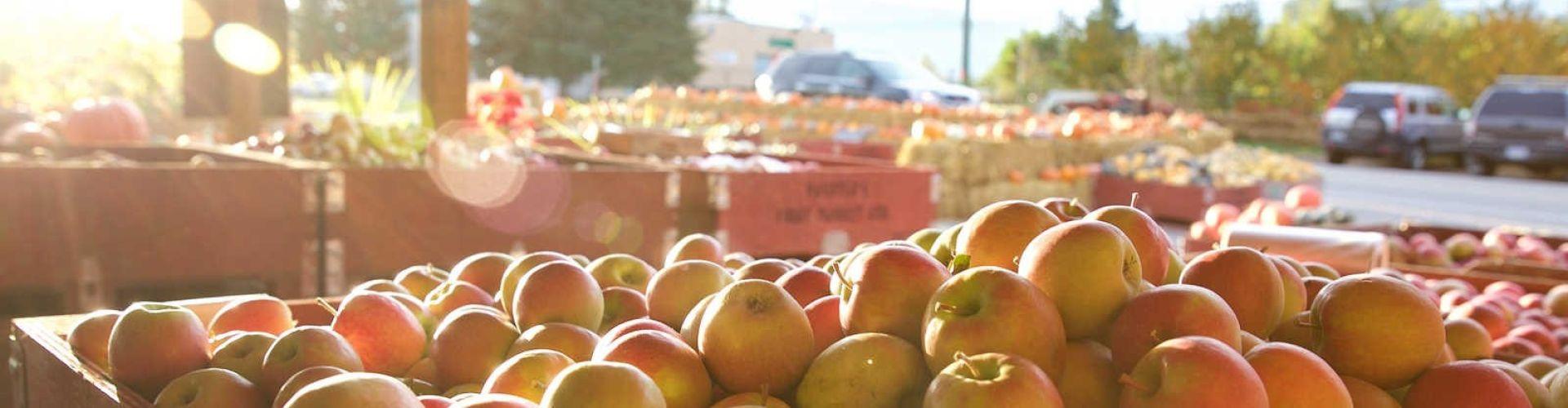 apple picking West Kelowna