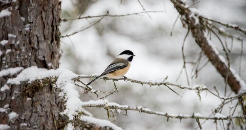bird watching west kelowna