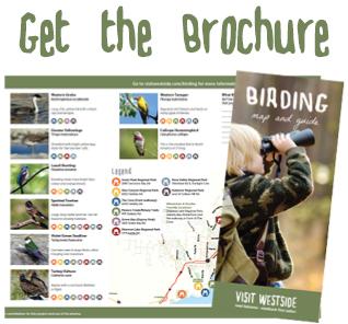 Bird Watching Brochure